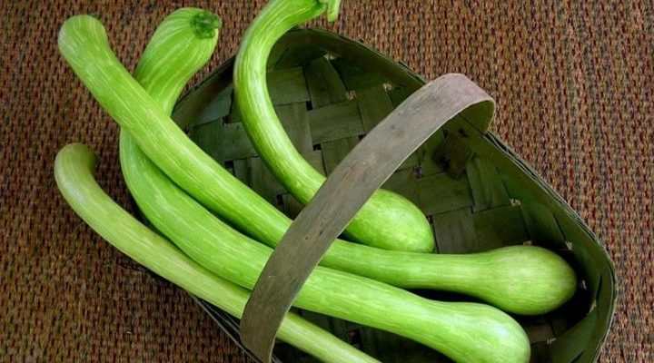 Zucca o zucchina? Trombetta!