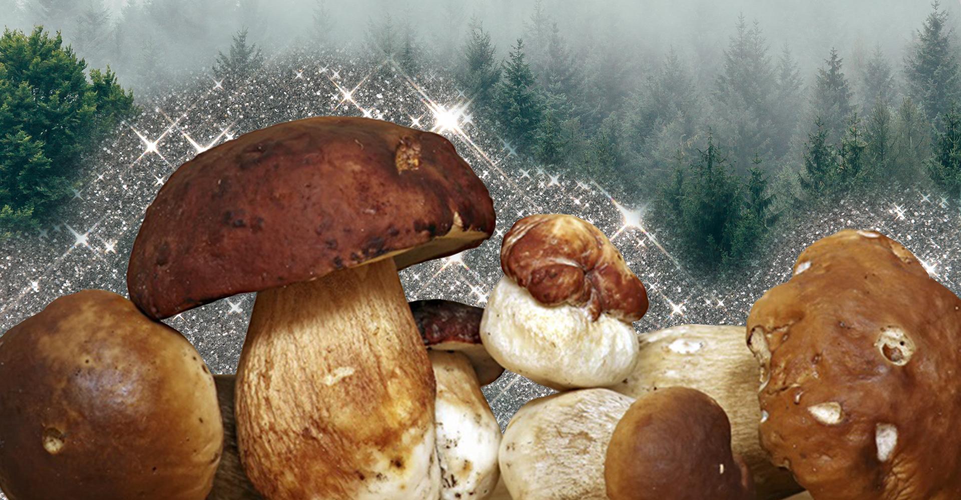 Come pulire i funghi porcini? La guida passo passo per un autunno senza intoppi