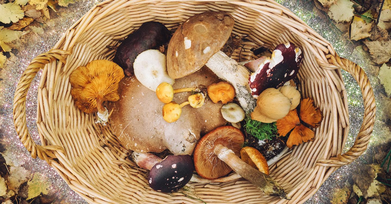 Funghi trifolati, gli errori da non fare per un piatto a regola d'arte