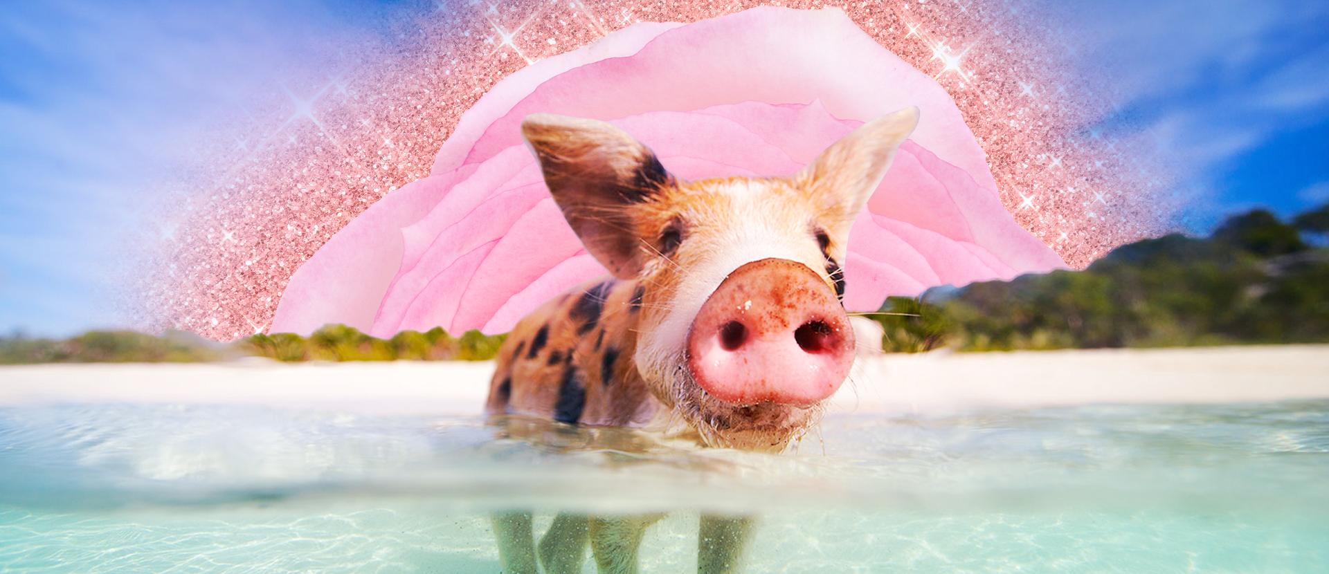 Pig Beach, l'isola delle Bahamas in cui si può nuotare con i maiali
