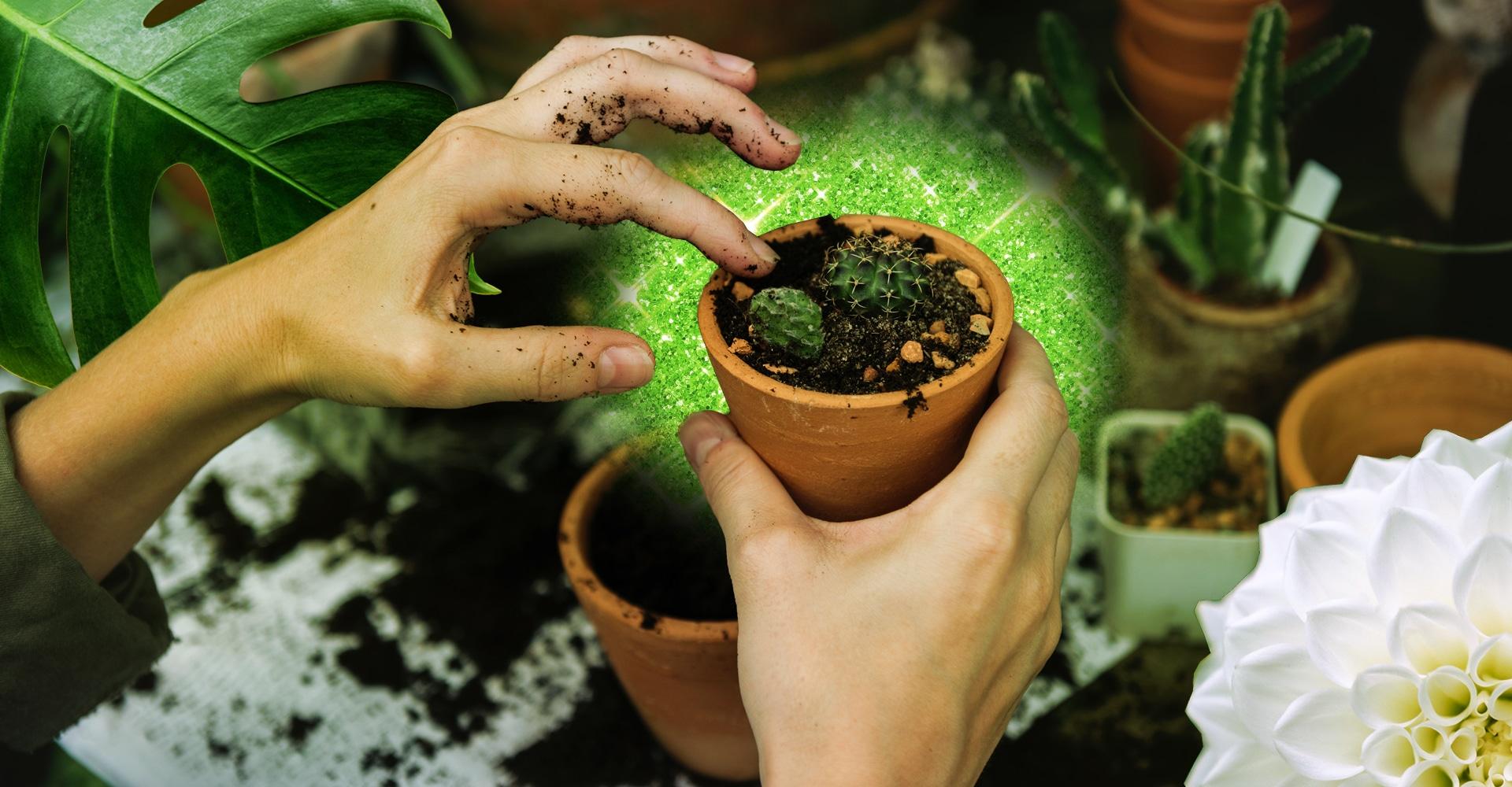 I benefici del giardinaggio sono un motivo validissimo per diventare pollice verde